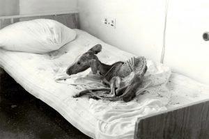 Собака, которая так и не дождалась возвращения своих хозяев из эвакуации
